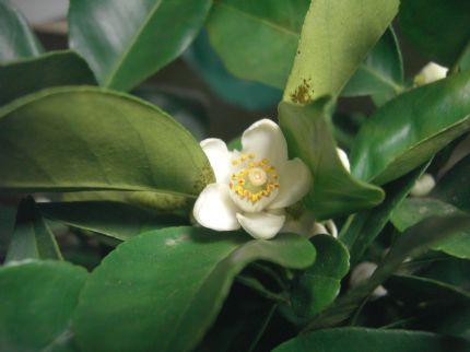 Underbara knubbiga blommor
