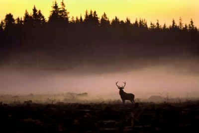 En dimmig vcker enastående bild, hihi