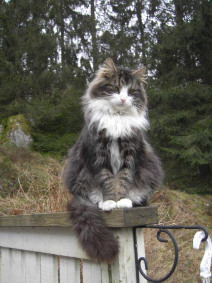 Vacker katt!