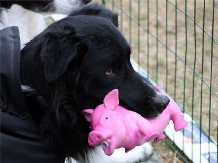 Vic med sin älskade gris i helgen ;)